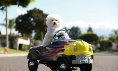 Veja cinco dicas para viajar de carro com o seu pet