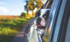 Abrir as janelas do carro pode reduzir o risco de contrair COVID-19? Foto: pexel